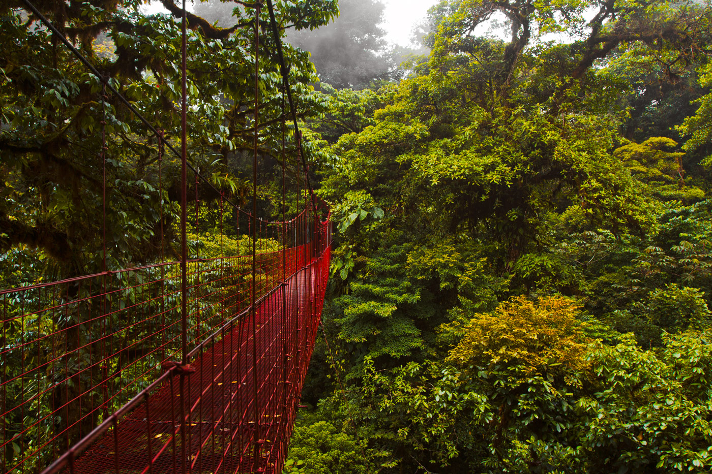 Nick-Zantop-Photography-Rainforest-2
