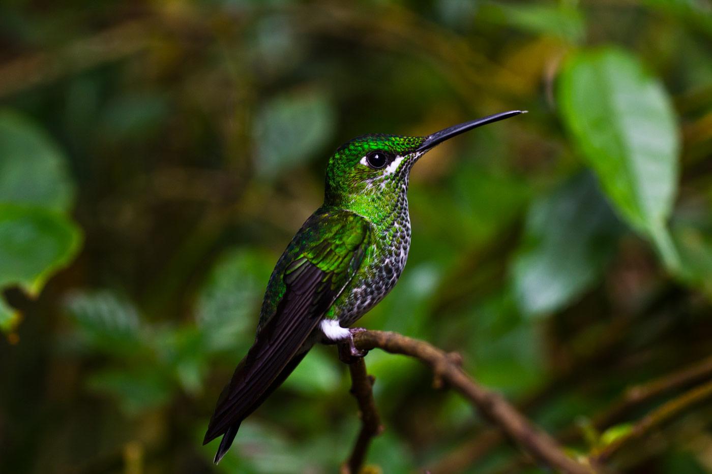 Nick-Zantop-Photography-Rainforest-3