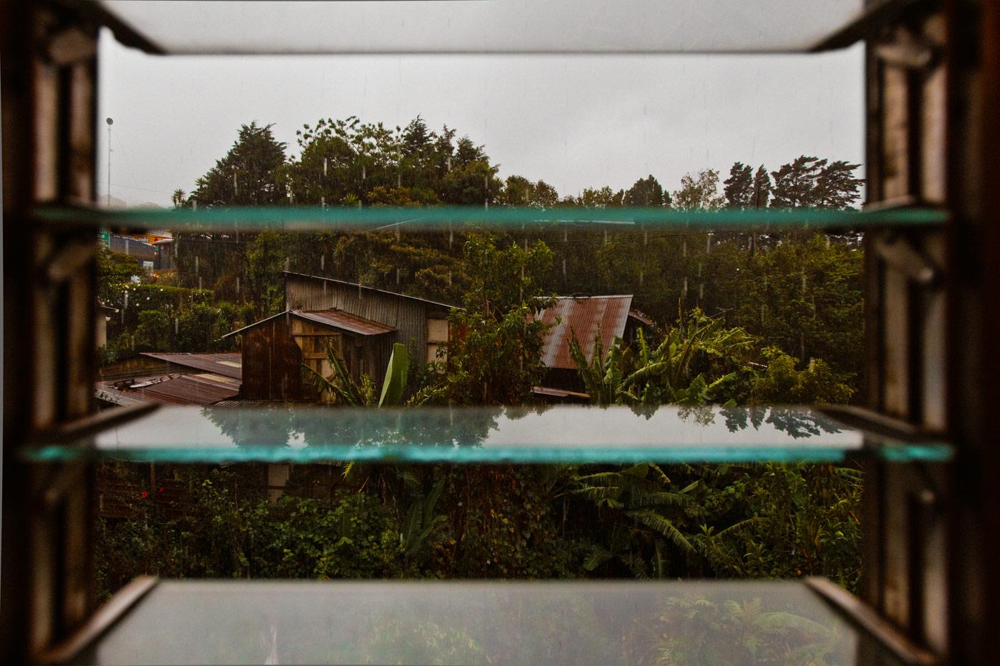 Nick-Zantop-Photography-Rainforest-5