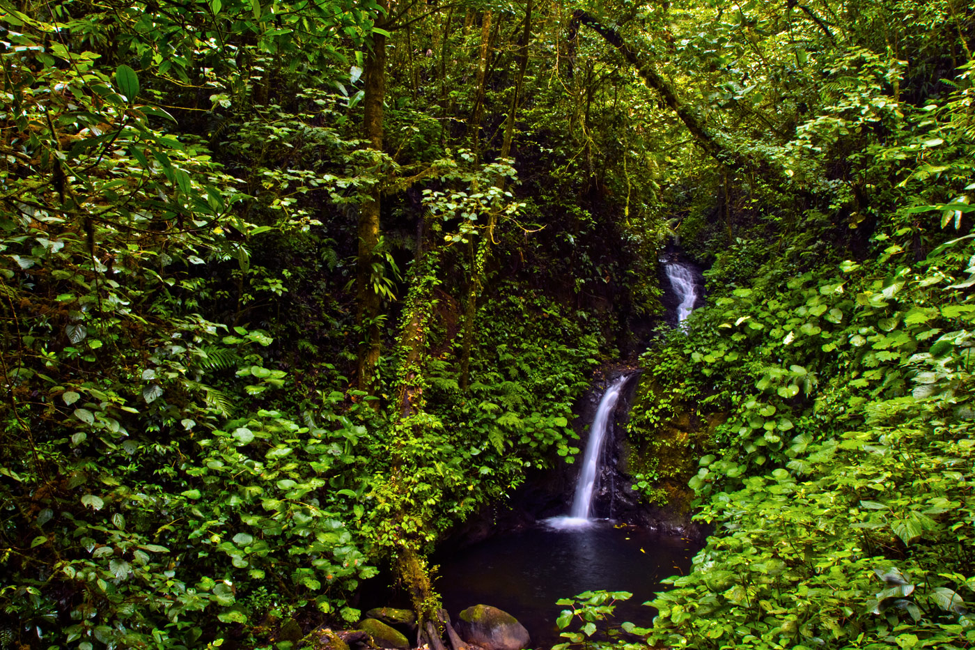 Nick-Zantop-Photography-Rainforest-6
