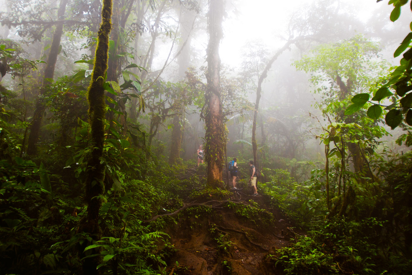 Nick-Zantop-Photography-Rainforest-7